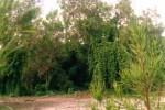Tipos de vegetación