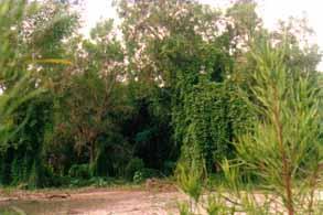 Tipos de vegetación del bosque tropical subcaducifolio