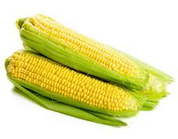 Tipos de maíz para mazorcas verdes